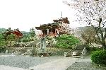 Tokyo mùa hoa anh đào
