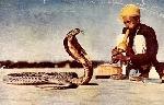 Biểu tượng rắn, từ ngôn ngữ đến văn hóa