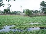 Cần có giải pháp khơi thông dòng chảy các hồ trong kinh thành Huế