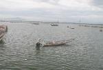 Thừa Thiên Huế: 42 tỷ đồng cho khu neo đậu vẫn không có tác dụng