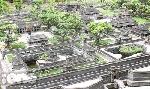 Ngắm mô hình cố đô Huế cực tinh xảo giữa lòng Sài Gòn