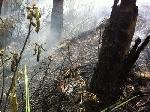 0,4 ha rừng thông 30 tuổi bị thiêu rụi
