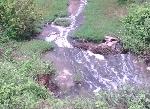 Khốn khổ vì nước thải công nghiệp