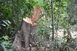 Nam Đông: Gần 6 ha rừng bị chặt phá, lấn chiếm