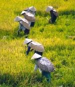 Phạm Văn Tý- Người vẽ quê hương mình bằng ảnh