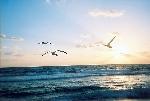 Tiếng chuông chùa giữa đại dương
