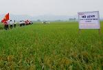 Thừa Thiên Huế có 1 dự án ứng dụng khoa học công nghệ được đặt hàng
