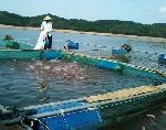 Quy định mới về nuôi cá lồng, bè trên địa bàn tỉnh Thừa Thiên Huế