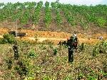 """Gia hạn dự án """"Giảm thiểu bom mìn tại tỉnh Thừa Thiên Huế"""" hoạt động trong năm 2017"""