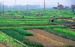 Điều chỉnh bổ sung Kế hoạch sử dụng đất của huyện Quảng Điền năm 2016