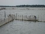 Từ 1.10, đánh bắt thủy sản trên đầm phá Tam Giang phải có giấy phép
