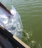 Lễ phát động tái tạo nguồn lợi thủy sản tại Phú Lộc