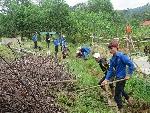 Nhiều chương trình tại hoạt động tình nguyện hè cấp tỉnh năm 2017