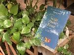 """""""Người trồng rừng"""": Ngợi ca sức mạnh tiềm ẩn của việc gieo hạt"""