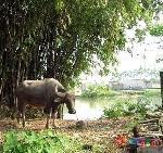 Thơ Sông Hương 10-1999