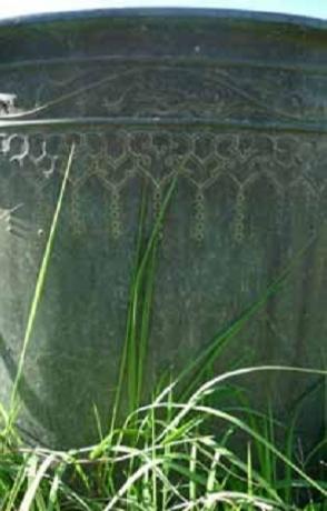 Dương Minh Long với thì thầm cỏ Huế