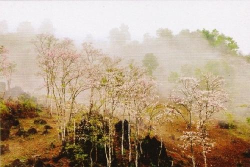Mường Phăng - Điện Biên