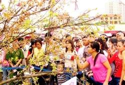 Lễ hội hoa anh đào 2009 tại Hà Nội: Hoa ít - người nhiều