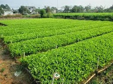 Tăng cường quản lý sản xuất, kinh doanh và lưu thông giống cây trồng lâm nghiệp trên địa bàn tỉnh
