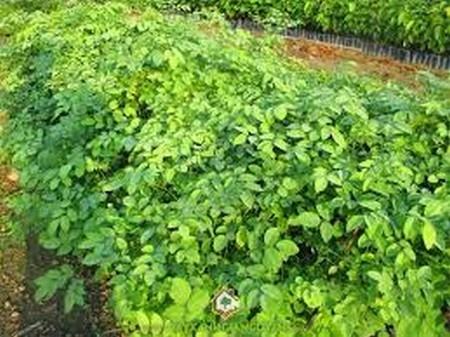 Tất cả các tổ chức, cá nhân sản xuất, kinh doanh giống cây trồng lâm nghiệp phải có giấy phép đăng ký kinh doanh về lĩnh vực giống cây trồng lâm nghiệp