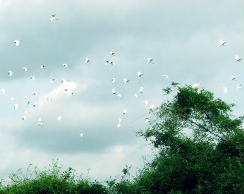 Thơ Sông Hương 03-1999